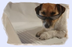 photo of dog with shades on typing on a laptop